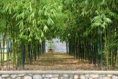 Φυσικός κήπος μπαμπού Στοκ Εικόνα