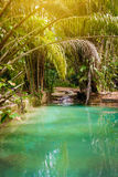 Φυσικός κολπίσκος λιμνών οάσεων στην τροπική ζούγκλα μπαμπού στο βόρειο Τρινιδάδ και Τομπάγκο Στοκ Εικόνες