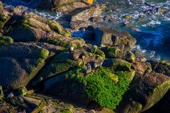 Φυσικός κόλπος Tauranga αποικιών σφραγίδων στη δυτική ακτή, Νέα Ζηλανδία Στοκ Εικόνες
