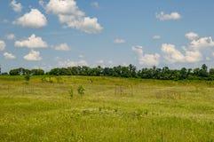 Φυσικός ορίζοντας - πράσινος τομέας ενάντια σε έναν μπλε ουρανό στοκ εικόνες με δικαίωμα ελεύθερης χρήσης