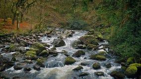 Φυσικός ποταμός μέσω του δάσους απόθεμα βίντεο