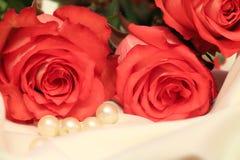 φυσικός ρόδινος λουλουδιών ομορφιάς στενός αυξήθηκε επάνω Στοκ φωτογραφίες με δικαίωμα ελεύθερης χρήσης