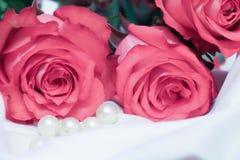 φυσικός ρόδινος λουλουδιών ομορφιάς στενός αυξήθηκε επάνω Στοκ Εικόνα