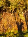 Φυσικός υγρός πορτοκαλής τοίχος πετρών με τις πράσινες εγκαταστάσεις Στοκ φωτογραφία με δικαίωμα ελεύθερης χρήσης
