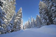 Φυσικός χειμερινός δασικός δρόμος Στοκ εικόνα με δικαίωμα ελεύθερης χρήσης