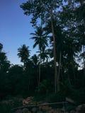 Φυσικός όμορφος προορισμός Ταϊλάνδη ταξιδιού σαφάρι ζώων ζουγκλών Στοκ Φωτογραφία