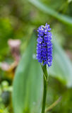 Φυσικό άγριο λουλούδι Στοκ φωτογραφία με δικαίωμα ελεύθερης χρήσης