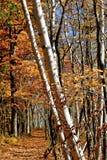 Φυσικό δάσος στη Ιντιάνα Στοκ εικόνα με δικαίωμα ελεύθερης χρήσης