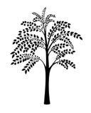 Φυσικό δέντρο σε ένα άσπρο υπόβαθρο Στοκ εικόνες με δικαίωμα ελεύθερης χρήσης
