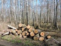 Φυσικό έλος, Λιθουανία Στοκ Εικόνα