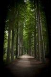 Φυσικό ίχνος στο πάρκο Στοκ Φωτογραφίες