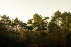 Φυσικό δασικό υπόβαθρο εποχής φθινοπώρου Στοκ εικόνες με δικαίωμα ελεύθερης χρήσης