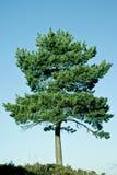 φυσικό δέντρο περιβάλλον&t Στοκ εικόνα με δικαίωμα ελεύθερης χρήσης