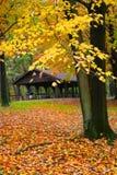 φυσικό δέντρο φθινοπώρου Στοκ φωτογραφία με δικαίωμα ελεύθερης χρήσης