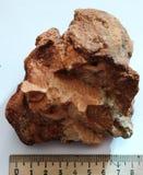 Φυσικό δείγμα του βράχου claystone argillite Στοκ Εικόνες