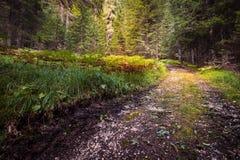 Φυσικό επίκεντρο Στοκ φωτογραφία με δικαίωμα ελεύθερης χρήσης