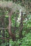 Φυσικό ελαφρύ φυσικό φως δέντρων φύσης παράξενο Στοκ εικόνα με δικαίωμα ελεύθερης χρήσης