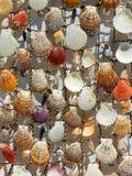 φυσικό θαλασσινό κοχύλι ανασκόπησης Στοκ Εικόνα