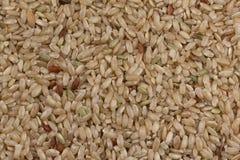 Φυσικό καφετί ρύζι Στοκ Εικόνες