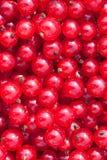 φυσικό κόκκινο σταφίδων α& Στοκ εικόνα με δικαίωμα ελεύθερης χρήσης