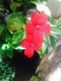 Φυσικό λουλούδι Στοκ Φωτογραφίες
