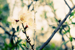 Φυσικό μακρο floral υπόβαθρο Στοκ εικόνες με δικαίωμα ελεύθερης χρήσης