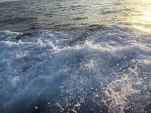 Φυσικό νερό τρόπου ζωής του ωκεανού Στοκ Εικόνα