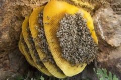 Φυσικό οργανικό μέλι Στοκ εικόνες με δικαίωμα ελεύθερης χρήσης