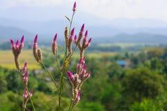 Φυσικό λουλούδι στοκ φωτογραφία με δικαίωμα ελεύθερης χρήσης