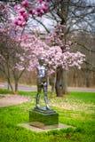 Φυσικό πάρκο, δέντρα, λουλούδια Στοκ εικόνες με δικαίωμα ελεύθερης χρήσης