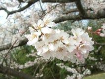 Φυσικό πάρκο λουλουδιών στοκ φωτογραφία με δικαίωμα ελεύθερης χρήσης