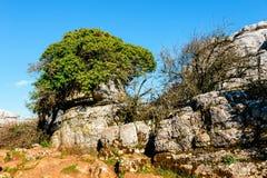 Φυσικό πάρκο EL Torcal de Antequera, Ανδαλουσία, Ισπανία Στοκ εικόνες με δικαίωμα ελεύθερης χρήσης