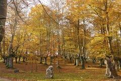 Φυσικό πάρκο Urkiola, βασκική χώρα, Ισπανία Στοκ εικόνες με δικαίωμα ελεύθερης χρήσης