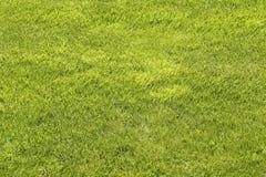 Φυσικό πράσινο απογυμνωμένο υπόβαθρο χορτοταπήτων Στοκ Φωτογραφία