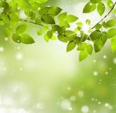 Φυσικό πράσινο υπόβαθρο με την εκλεκτική εστίαση Στοκ Φωτογραφίες