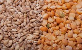 Φυσικό σιτάρι σίτου στοκ φωτογραφίες με δικαίωμα ελεύθερης χρήσης