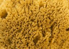 Φυσικό σφουγγάρι HD θάλασσας Στοκ Εικόνες