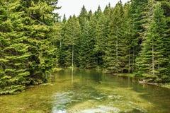 Φυσικό τοπίο - λίμνη και δασικό υπόβαθρο στοκ εικόνα