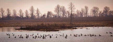 Φυσικό τοπίο κοντά σε Edwardsville Ιλλινόις στοκ φωτογραφίες