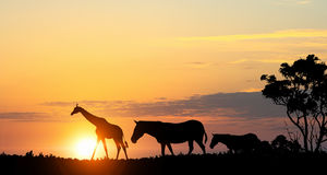 Φυσικό τοπίο σαφάρι στα φω'τα του ηλιοβασιλέματος Μικτά μέσα Στοκ φωτογραφία με δικαίωμα ελεύθερης χρήσης