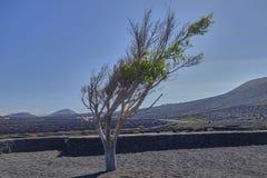 Φυσικό τοπίο στο νησί Lanzarote στον Ατλαντικό Ωκεανό στοκ εικόνα