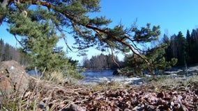 Φυσικό τοπίο της Κύμης στη Φινλανδία, γρήγορη κίνηση νερού ποταμού κατά μήκος του παράκτιου δάσους απόθεμα βίντεο
