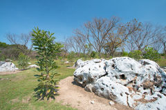Φυσικό τοπίο της ξηράς ραγισμένης λάσπης Στοκ εικόνες με δικαίωμα ελεύθερης χρήσης