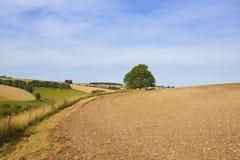 Φυσικό τοπίο του Γιορκσάιρ wolds Στοκ Εικόνα