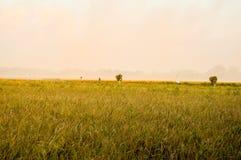 Φυσικό τοπίο των τομέων ρυζιού Στοκ εικόνες με δικαίωμα ελεύθερης χρήσης