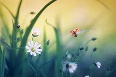Φυσικό υπόβαθρο με λίγο ladybug που πετά το ευρύ straightenin Στοκ φωτογραφίες με δικαίωμα ελεύθερης χρήσης