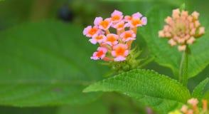 Φυσικό υπόβαθρο στα λουλούδια και τα πράσινα φύλλα Στοκ εικόνα με δικαίωμα ελεύθερης χρήσης