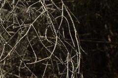 Φυσικό υπόβαθρο σφαιρών Στοκ φωτογραφία με δικαίωμα ελεύθερης χρήσης