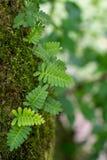 Φυσικό υπόβαθρο της φτέρης, του βρύου και των μαλακών πράσινων φύλλων στοκ φωτογραφία