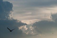 Φυσικό υπόβαθρο του ζωηρόχρωμου δραματικού μπλε ουρανού κατά τη διάρκεια του χρόνου ηλιοβασιλέματος με τα πετώντας πουλιά στοκ εικόνες με δικαίωμα ελεύθερης χρήσης
